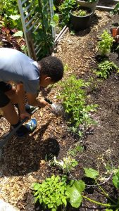 Meals and Gardening at Lake City Court